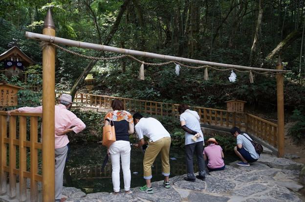 八重垣神社 鏡の池 到着♪