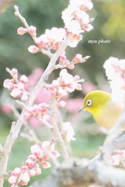 梅の香りに恋をして。。