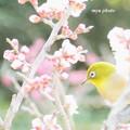 Photos: 梅の香りに恋をして。。
