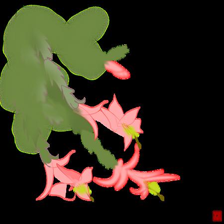 蝦蛄葉仙人掌