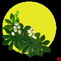 写真: 八手の花