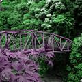 写真: 打除鉄橋