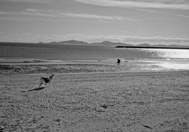 写真: 浜辺