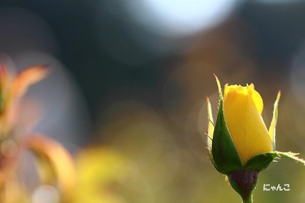 写真: ~輝きに満ちて~
