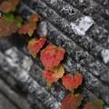 写真: ~秋探し散歩~
