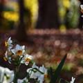 写真: ~落ち葉の煌めきに~