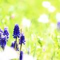 Photos: ~秘密の花園、再び~