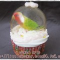 写真: 文鳥のスノードーム・カップケーキ2-3