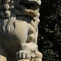 Photos: カラコン狛犬