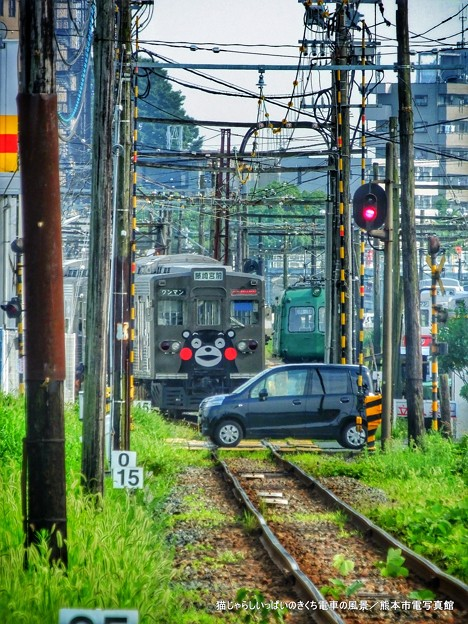 猫じゃらしいっぱいのきくち電車の風景。
