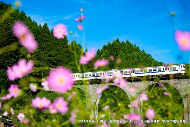 コスモス列車。