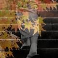 秋への階段