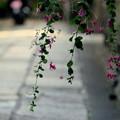 萩の咲く路地