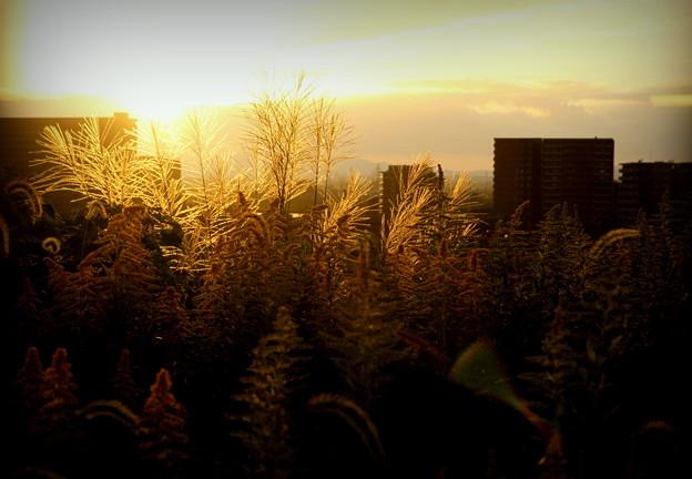 Photos: 秋が手を振る夕暮れ