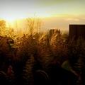 秋が手を振る夕暮れ