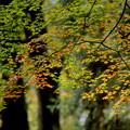 Photos: 森の囁き