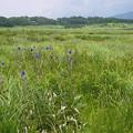 タデ原湿原の夏(2)