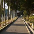 Photos: 臼杵石仏 参道