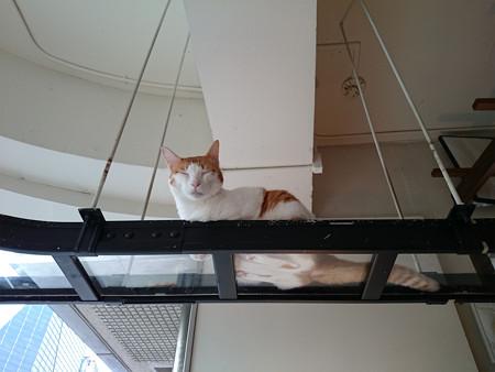 猫カフェキューリグ TheLoft 天神(6)