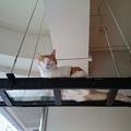 写真: 猫カフェキューリグ TheLoft 天神(6)