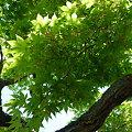 写真: 御船山楽園の春(1)