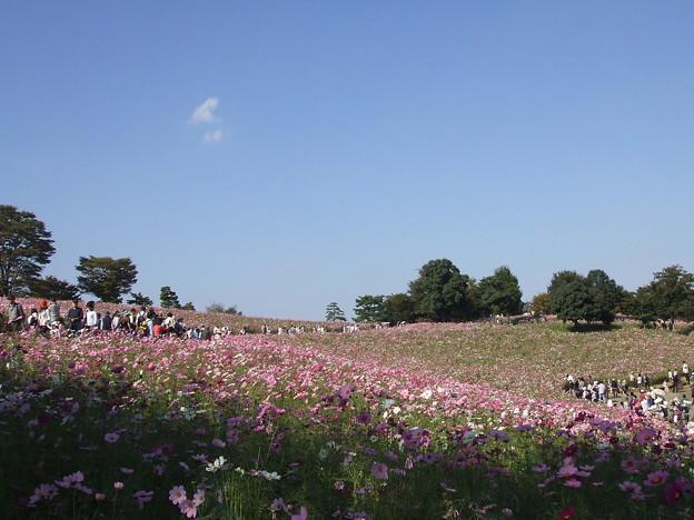 国営昭和記念公園 091