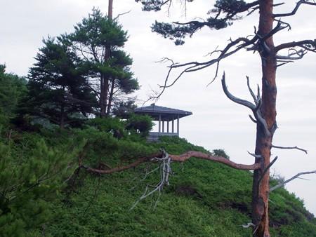 sakiyamanosiohukiana14