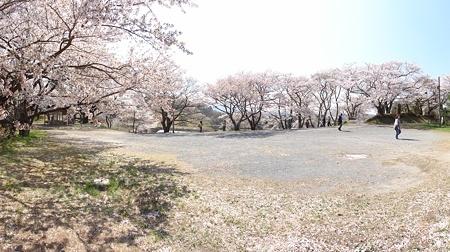 miharutakizakura_p7