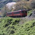Photos: 新緑・・・