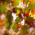 Photos: 秋を偲んで