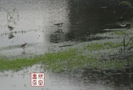 春日部市の休耕田02