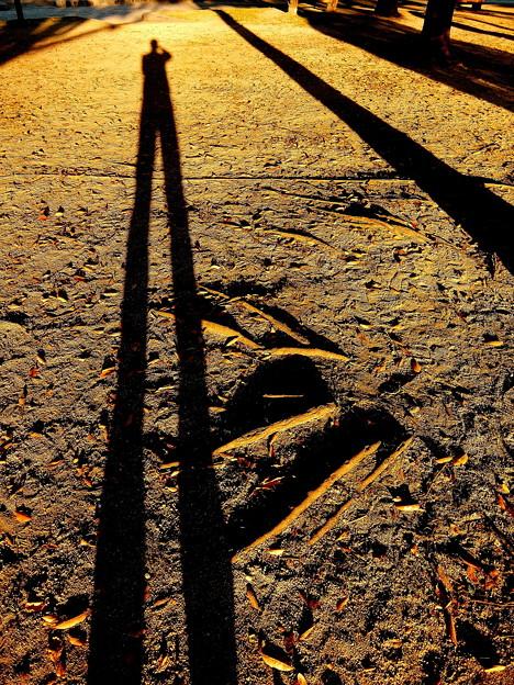 ~今朝のお散歩画~Shadow~♪