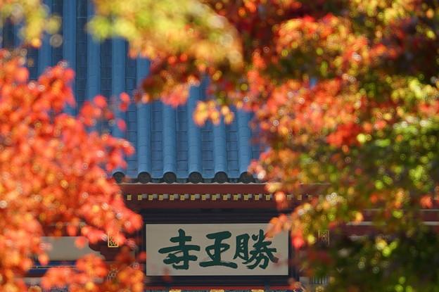 勝尾寺の紅葉