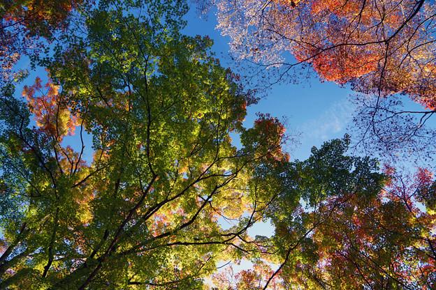 色とりどりの紅葉と青空