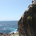 写真: IMG_6851神津島__天上山登山と島巡り