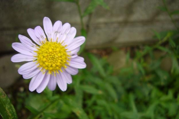 140630-7 薄紫の花