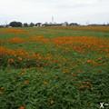 Photos: 牧場を埋める