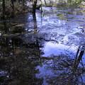 蔵出の上高地  明神池から帰る途中 清流