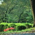 樹木公園 緑の中のヒガンバナ