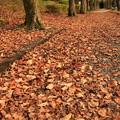 落ち葉の小道  カサカサ、カサコソ、カリカリ、サクサク