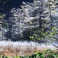 霜の朝   上高地