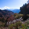 白山スーパー林道 紅葉 奥に白山(1)
