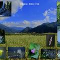 手取峡谷と綿ヶ滝 咲いていた花と蕎麦畑