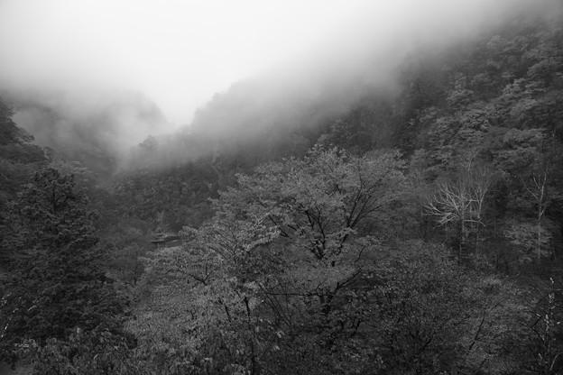 いろは坂 霧(3)  モノクロで