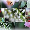 我が家の11月の花  滴