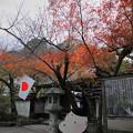 石山寺(8) 大黒天堂 門 紅葉