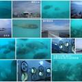 海中展望塔から 海の魚