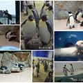 アドベンチャーワールド ペンギンとラッコ