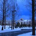 Photos: 雪のメタセコイアの並木道