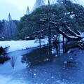 雪の兼六園  唐崎松1